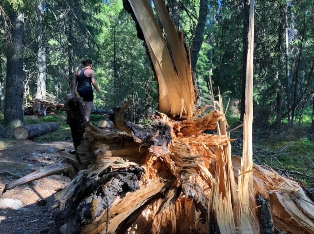 Trasigt träd